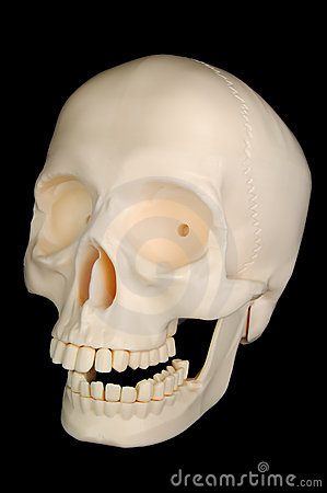 Cráneo divertido