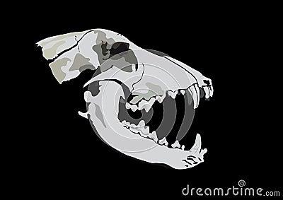 Crânio de um predador