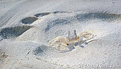 Crab Editorial Photo