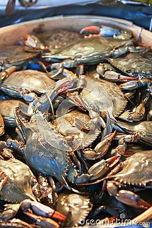 Free Crab Stock Image - 18229501
