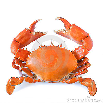 Free Crab Stock Photos - 20559193