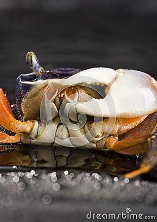 Free Crab Stock Photos - 2104513