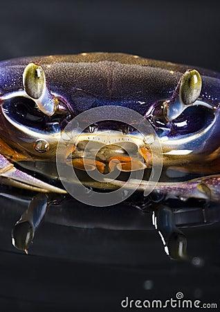 Free Crab Stock Photo - 2104580