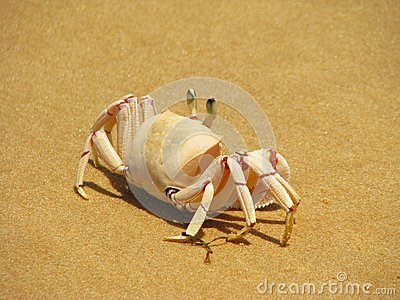 Crab On The Beach On Bazaruto Island Stock Photo - Image: 24786750