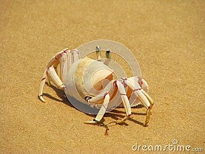 Crab on the beach on Bazaruto Island