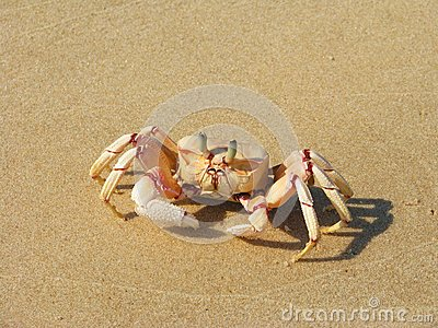 Crab on the beach on Bazaruto Island
