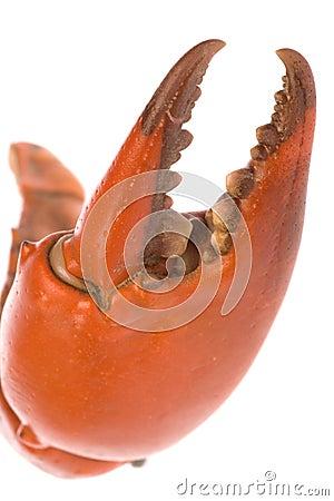 Crab Claw Macro