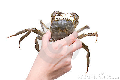 Crab  (Clipping path)