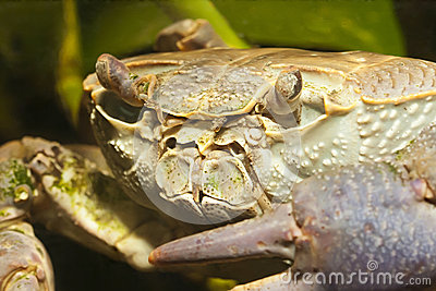 Crab close up