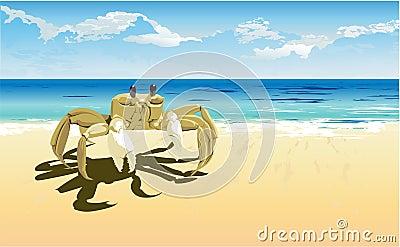 Crab daylight