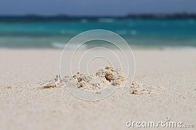 Crab digging