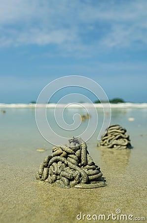 Crab hole