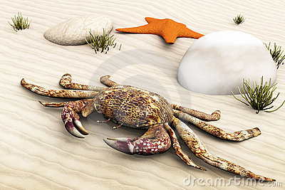 Crab on land