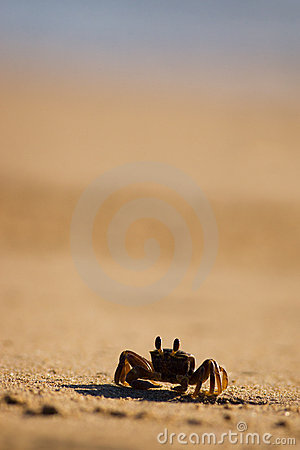 Free Crab On The Beach Royalty Free Stock Photography - 20814757