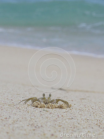 Free Crab On The Beach Stock Image - 36018111