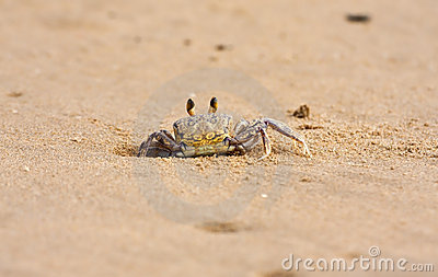 Crab peeping out of hole in sand on beach