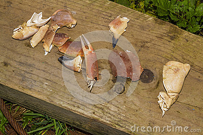 Crab pieces on wooden plank