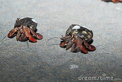 Crab Racing 2