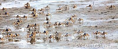 Crab run