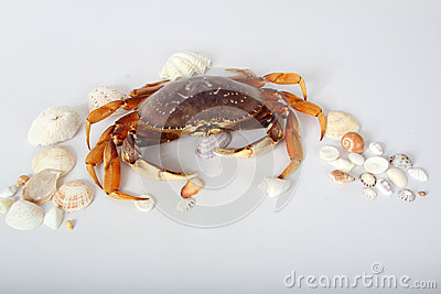 Crab With Seashells