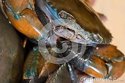 Crab Series 01
