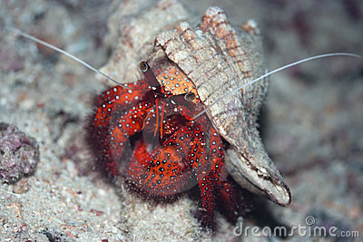 Crab in shell