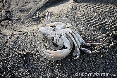 Crab skeleton