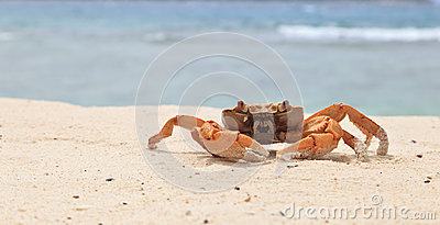 Crab on tropical beach