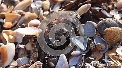 Crabe mort clips vidéos