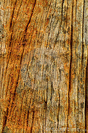 Crack wood