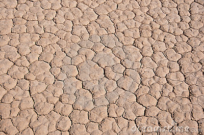 Cracked desert ground