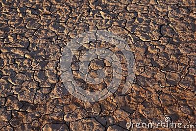 Cracked dry desert floor