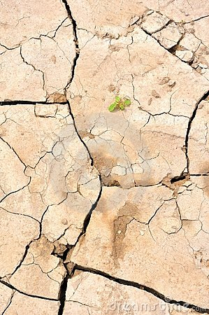Cracked Earth & New Life