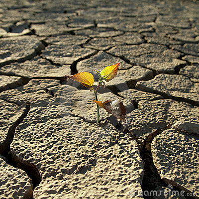 Free Cracked Lifeless Soil Royalty Free Stock Image - 17499546