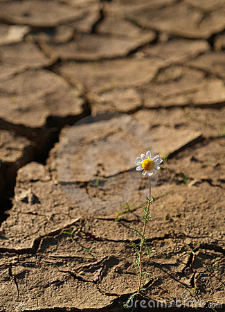 Cracked soil With a single flower