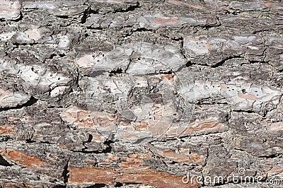 Cracked tree bark texture