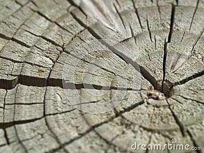 Cracks in a cut log