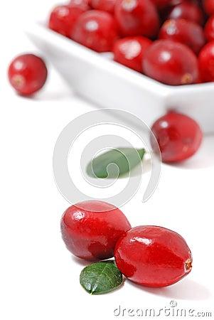 Free Cranberries Stock Image - 7340471