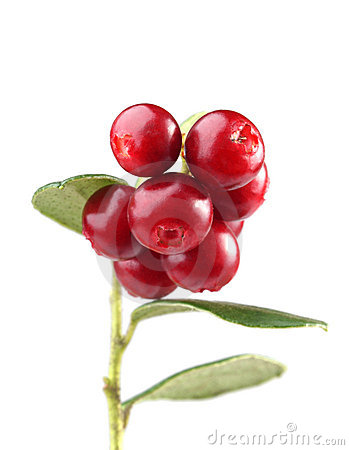 Free Cranberry Stock Photo - 11642530