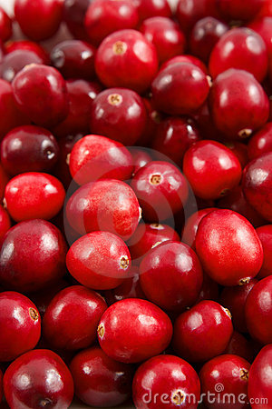 Free Cranberry Royalty Free Stock Photography - 3335937