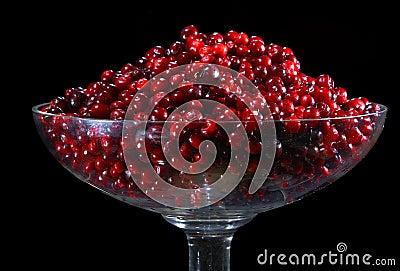 Cranberry.