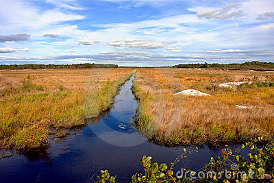 Cranberry Bog and Irrigation Canal In New Jersey