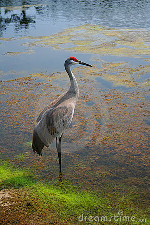 Free Crane Stock Images - 2527934