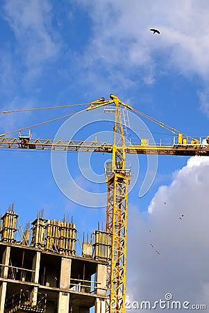 Crane with birds