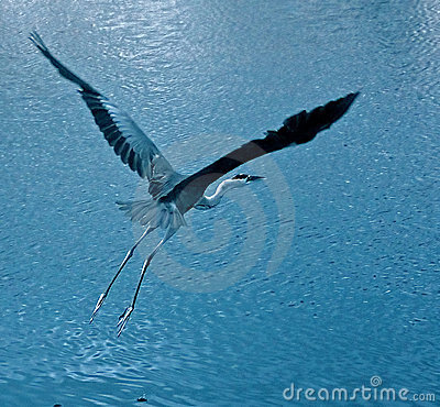 Free Crane In Flight Stock Photo - 2925620