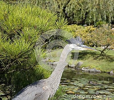 Crane in Japanese garden