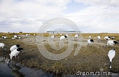 Crane natural reserve