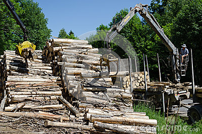 Cranes claw stack of timber logs at lumber mill Editorial Stock Photo