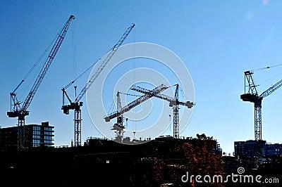 Cranes on the Skyline
