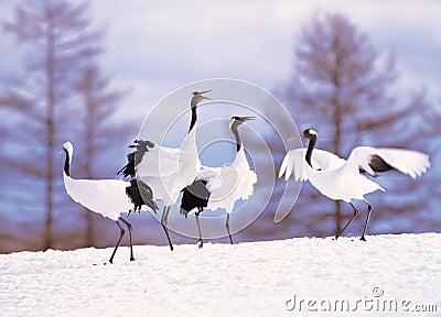 Cranes in snowscape